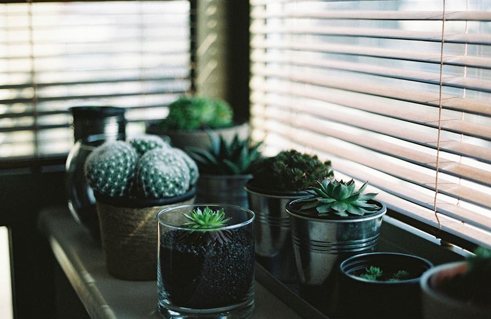 Try these simple hacks for happier plants